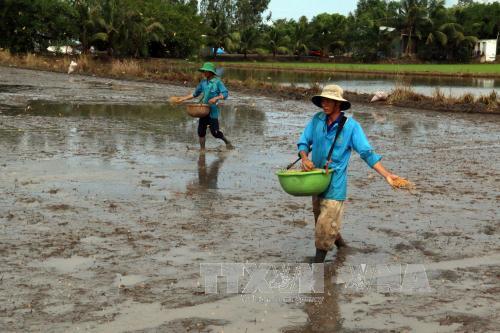 Biến đổi khí hậu: Kiên Giang khẩn trương xuống giống vụ lúa Hè Thu